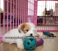 Morkie  Puppies for sale Gwinnett County Ga (6)